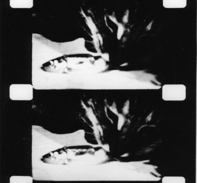 PLASTIK Festival: Curating The Moving Image  Joyce Wieland, 'Catfood' (1967) filmstrip
